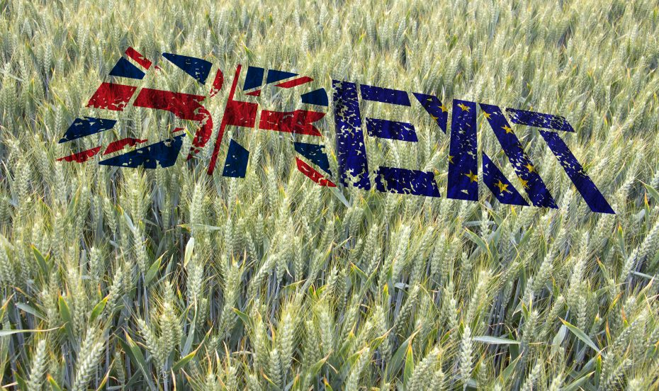 Brexit writing in field